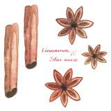Watercolor cinnamon and star anise on the white Stock Photography