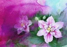Watercolor clematis Stock Image