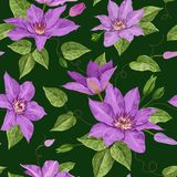 Watercolor Clematis Flowers. Floral Tropical Seamless Pattern for Wallpaper, Print, Fabric, Textile. Summer Background. With Blooming Purple Flowers and Leaves Royalty Free Stock Photo