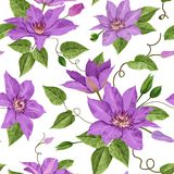 Watercolor Clematis Flowers. Floral Tropical Seamless Pattern for Wallpaper, Print, Fabric, Textile. Summer Background. With Blooming Purple Flowers and Leaves Royalty Free Stock Photos