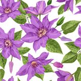 Watercolor Clematis Flowers. Floral Tropical Seamless Pattern for Wallpaper, Print, Fabric, Textile. Summer Background. With Blooming Purple Flowers and Leaves Stock Image