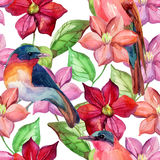 Watercolor clematis seamless pattern. Royalty Free Stock Images