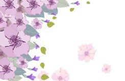 Watercolor clip art purple rosalinda Royalty Free Stock Image