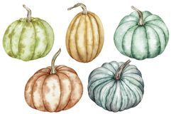 Watercolor clipart of colorful pumpkins - green, red, orange, blue. Thanksgiving collection of pumpkin harvest.