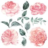 Watercolor clipart delicate flowers peonies, garden roses and leaves. Vintage set.