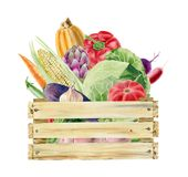 Watercolor clipart of vegetables in box Stock Photos