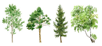 Watercolor cliparts of trees. Set collection clipboard arrangement of hand painted drawn watercolor cliparts of trees royalty free illustration
