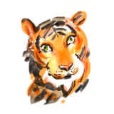 Watercolor close up portrait of a tiger. Hand drawn illustration. Realistic wild animal drawn in wet brushes style. Wild cat sketch. Asia safari hunter. Circus royalty free stock photo