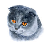 Watercolor closeup portrait of scottish fold cute cat  on white background. Hand drawn home pet. Clip art Stock Photos