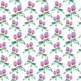 Watercolor clover herb. seamless pattern Royalty Free Stock Photography