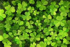 Watercolor clover leaves. Green trefoils, hand drawn background Stock Photography