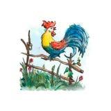 Watercolor cock vector Royalty Free Stock Photo