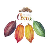 Watercolor cocoa fruit. Collection on white background. Hand drawn exotic cacao plants in different color stock illustration