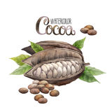Watercolor cocoa fruit Royalty Free Stock Photography