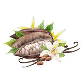 Watercolor cocoa fruit and vanilla flowers Stock Photos