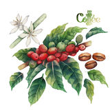Watercolor coffee collection Royalty Free Stock Photography