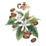 Watercolor coffee vignette. Watercolor coffee beans and flowers isolated on white background. Floral decoration stock illustration