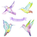 Watercolor colibri. Set with a samples of colibri painted in watercolor on a white background Stock Images