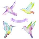 Watercolor colibri Stock Images