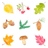 Watercolor Collection of Autumn Elements Stock Image