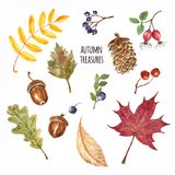 Watercolor collection of autumn forest plants, leaves and berries, isolated