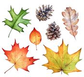 Watercolor collection of autumn leaves and pine cones on white b royalty free stock photo