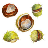 Watercolor collection with chestnuts Stock Photo