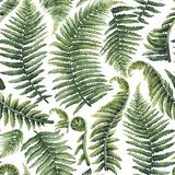 Watercolor fern leaves royalty free stock photography