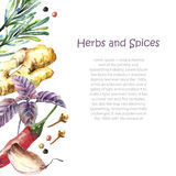 Watercolor collection of fresh herbs and spices . stock illustration