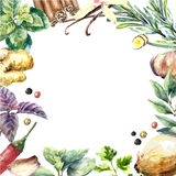 Watercolor collection of fresh herbs and spices . Stock Images