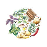 Watercolor collection of fresh herbs and spices . Royalty Free Stock Photography