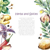 Watercolor collection of fresh herbs and spices isolated. vector illustration