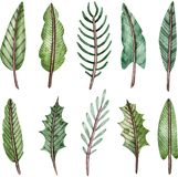 Watercolor collection of green tree branches. Fir and spruce twigs. Christmas decoration clipart.