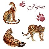 Watercolor collection of jaguars isolated on a white background stock illustration
