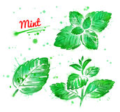 Watercolor collection of mint. Branch and leaves with paint smudges and splashes Stock Photos