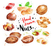 Watercolor collection of nuts Stock Photos