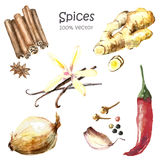 Watercolor collection spices. Watercolor collection of spices isolated.  Hand draw illustration Royalty Free Stock Photo