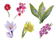 Watercolor collection of spring flowers including narcissus, lily of the valley, cherry flowers, apple flowers, crocus, saffron fl stock illustration