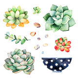 Watercolor collection with succulents plants,pebble stones, branche,painted pot Stock Image