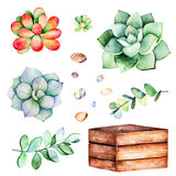 Watercolor collection with succulents plants,pebble stones, branche,wooden pot. Handpainted iclipart isolated on white background.World of succulent and cactus Stock Photography