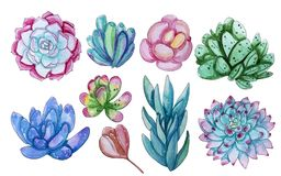 Watercolor collection with succulents plants vector illustration