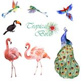 Watercolor collection of tropical birds isolated on a white background. Watercolor hand-painted collection of tropical birds isolated on a white background stock illustration