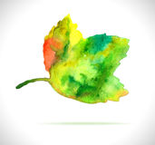 Watercolor color leaf design element Stock Photography