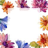 Watercolor colorful african daisy flower. Floral botanical flower. Frame border ornament square. Aquarelle wildflower for background, texture, wrapper pattern stock illustration