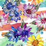Watercolor colorful african daisy flower. Floral botanical flower. Seamless background pattern. Fabric wallpaper print texture. Aquarelle wildflower for royalty free illustration