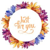 Watercolor colorful african daisy flower. Floral botanical flower. Frame border ornament square. Aquarelle wildflower for background, texture, wrapper pattern royalty free illustration