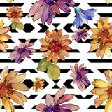 Watercolor colorful african daisy flower. Floral botanical flower.Seamless background pattern. Watercolor colorful african daisy flower. Floral botanical flower vector illustration