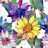 Watercolor colorful african daisy flower. Floral botanical flower. Seamless background pattern. Fabric wallpaper print texture. Aquarelle wildflower for stock illustration