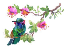 Watercolor colorful Bird on branch with green leaves and flowers. Watercolor colorful Bird on branch with green leaves and flowers Royalty Free Stock Photo