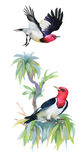 Watercolor colorful Birds and branch with green leaves. Stock Photography